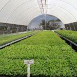 cultivos intensivos