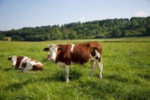 conversión a producción ecológica