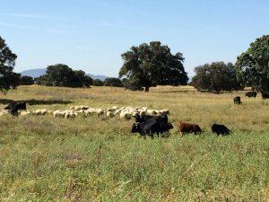 agricultura-ganadería-gestión-integral-fincas