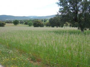 Cultivos forrajeros de secano para siega
